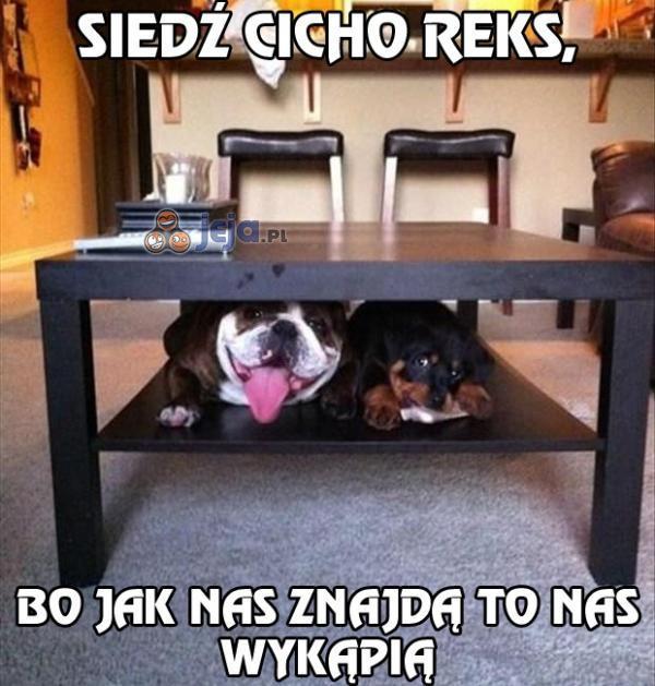 Siedź cicho Reks