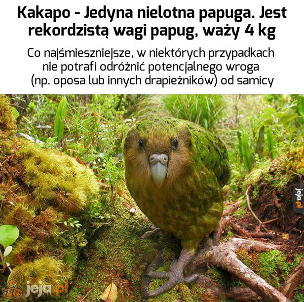 No niezły z niego ptaszek