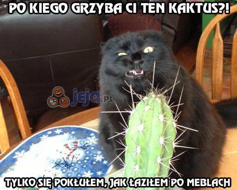 Po co Ci ten kaktus?