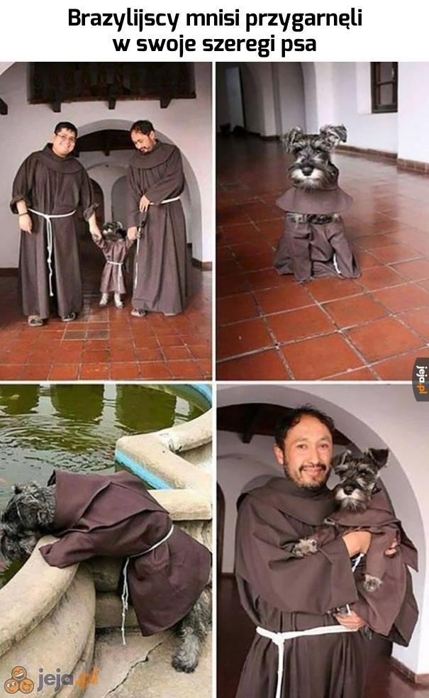 Kudłaty mnich