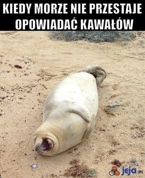 Morzu, przestań!
