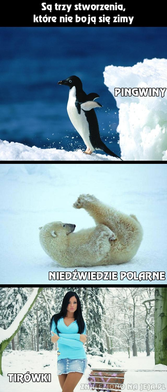 Trzy stworzenia, które nie boją się zimy