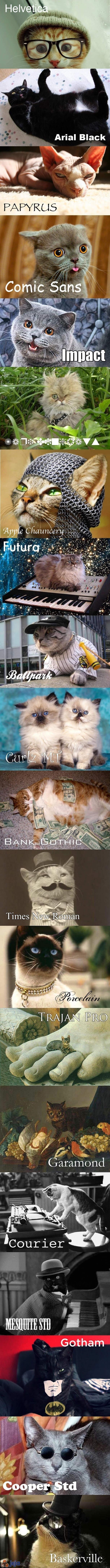 Koty i czcionki