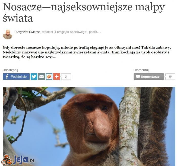 Apetyczne małpeczki