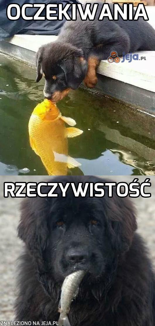 No, daj buziaka rybce!