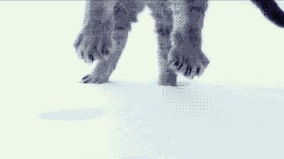 Miękkie lądowanie, miękkiego kotka