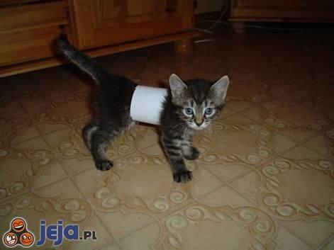 Kot w rurce