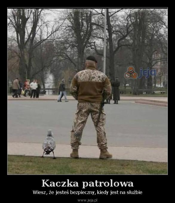Kaczka patrolowa