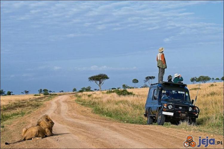 Wypatrywanie zwierząt na Safari