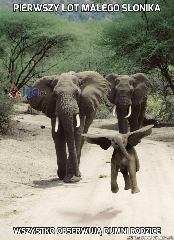 Pierwszy lot małego słonika