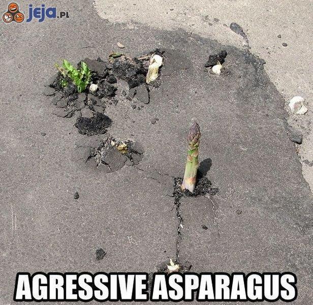 Agresywne szparagi
