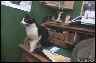 Kot źle ocenił dystans