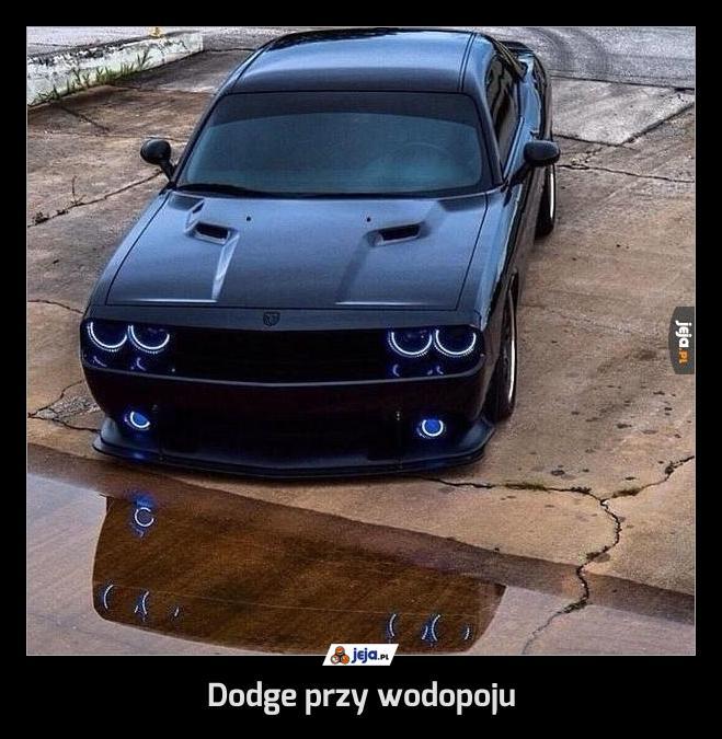 Dodge przy wodopoju