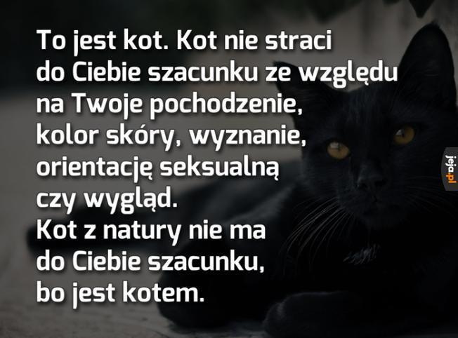 Filozofia kotów