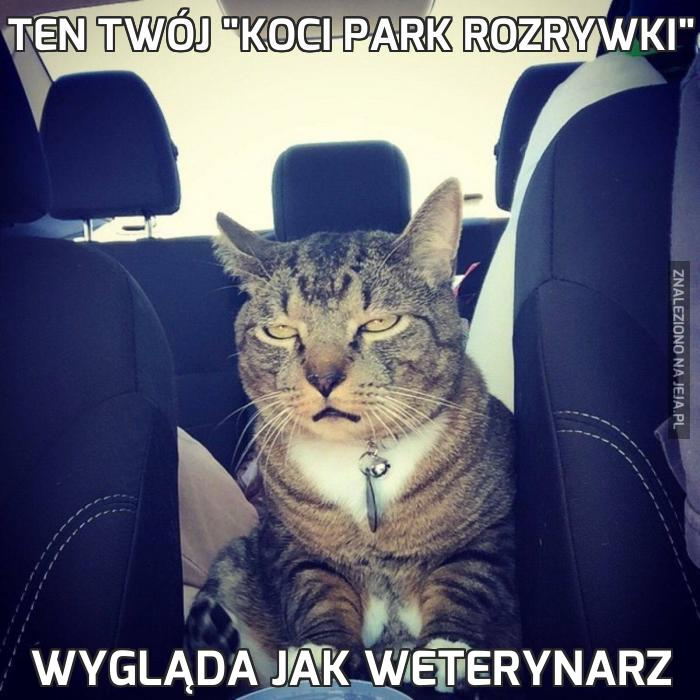 """Ten twój """"koci park rozrywki"""""""