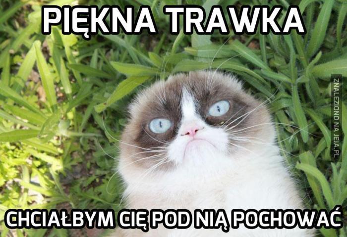 Grumpy Cat jak zwykle w humorze
