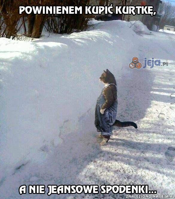 Koteł nie zawsze podejmuje dobre decyzje