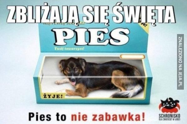 Pies to nie zabawka