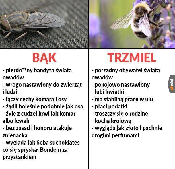 Krótkie porównanie w świecie owadów
