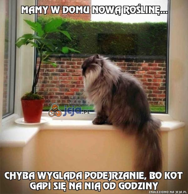 Mamy w domu nową roślinę...