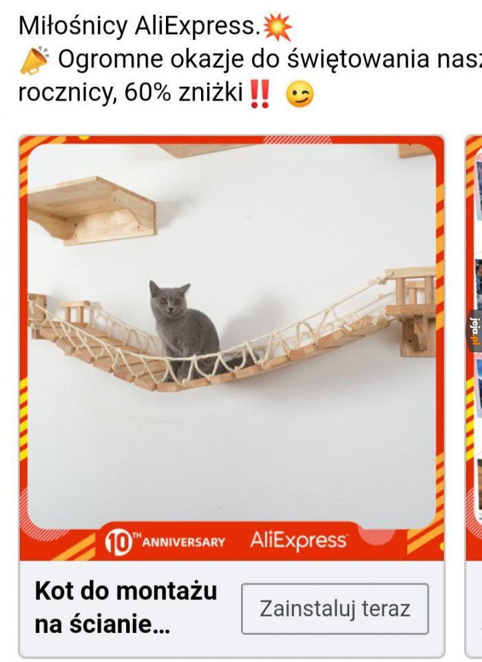 Biedny kot...