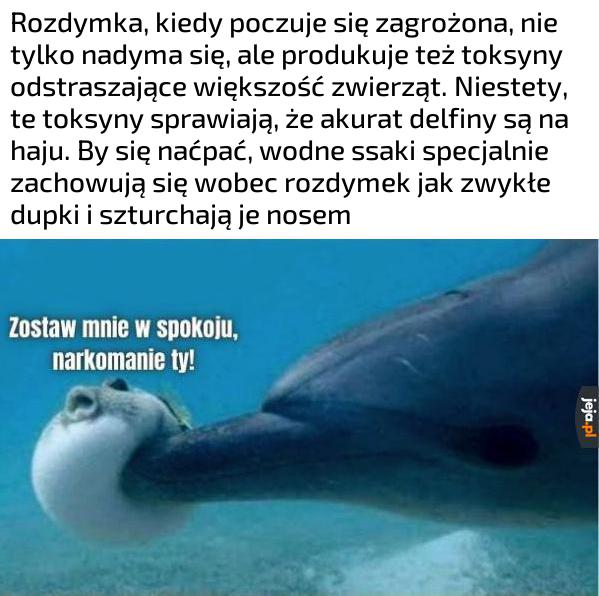 Morscy degeneraci