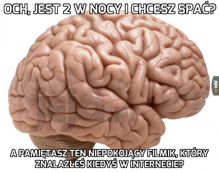Mózgu, przestań!