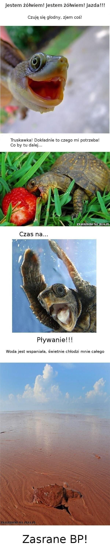 Wspaniałe życie żółwia