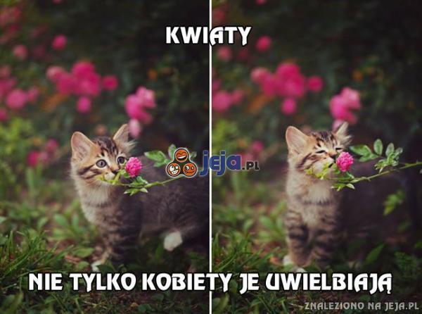Kwiaty, koty i kobiety