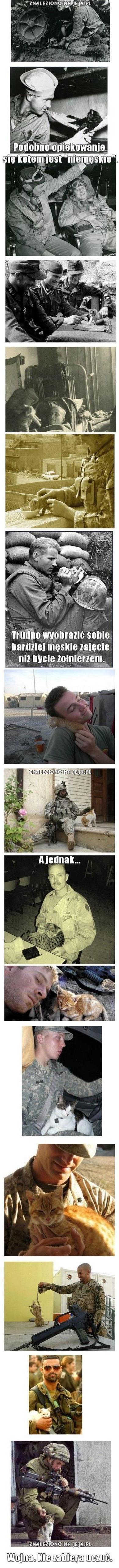Żołnierze i koty