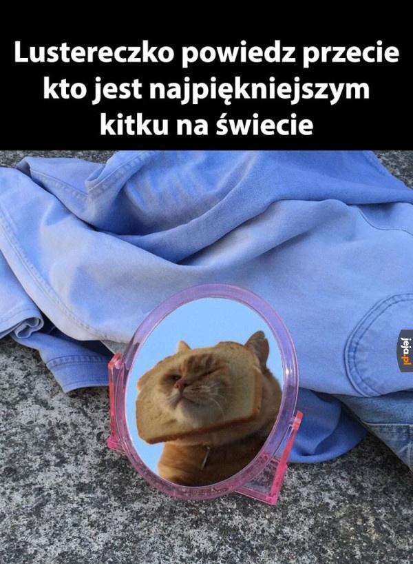 Ty kocie w chlebie