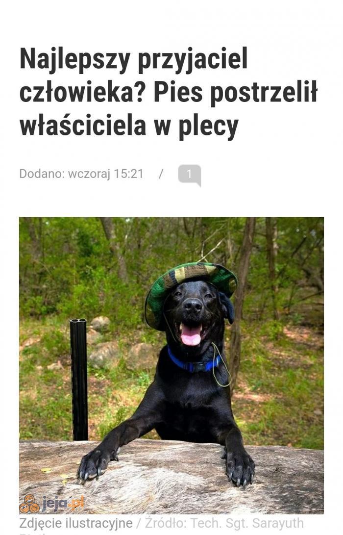 Psy wchodzą na nowy poziom