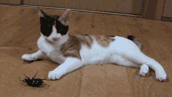 Kot vs. Chrząszcz
