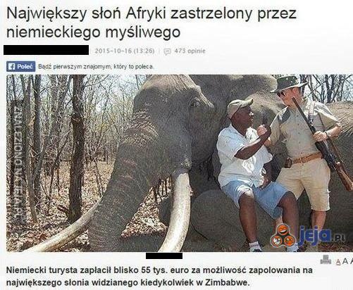 Biedny słonik