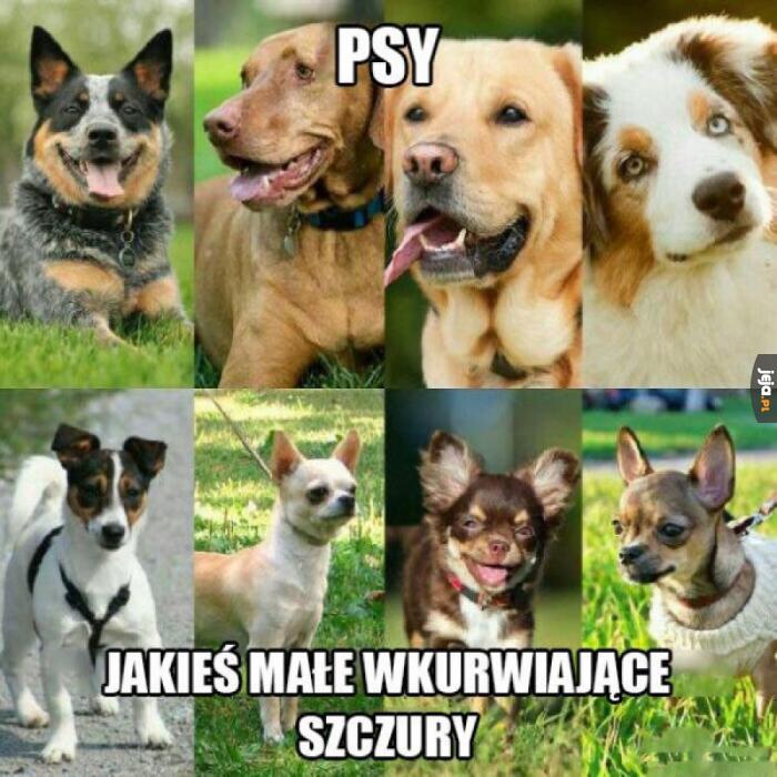 Tylko prawdziwe psy