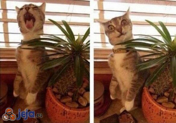 Mój kot ugryzł kaktusa