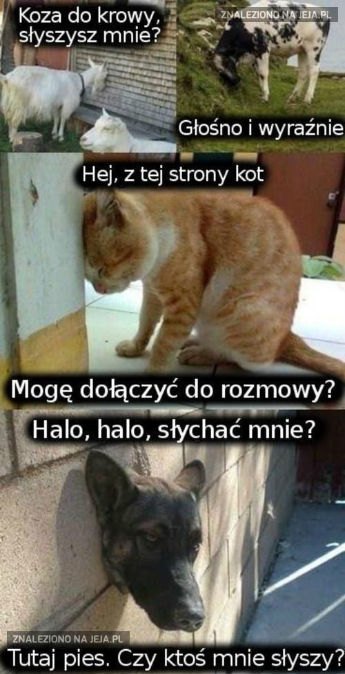 Halo, halo, słychać mnie?
