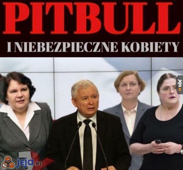 Pitbull i Niebezpieczne Kobiety