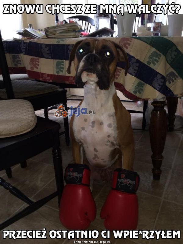 Urodzony bokser