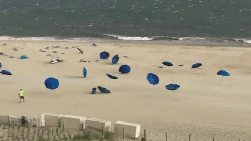 Wielka migracja parasoli