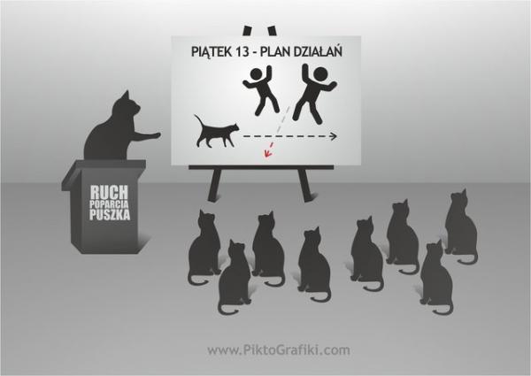Koty już planują