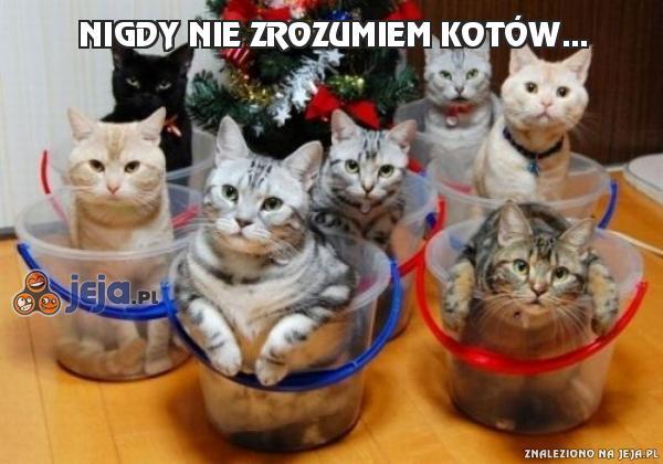 Nigdy nie zrozumiem kotów...