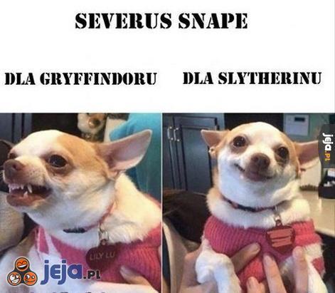 Stosunek Severusa Snape'a