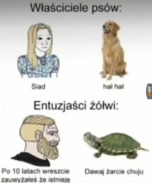 I tak żółwie lepsze