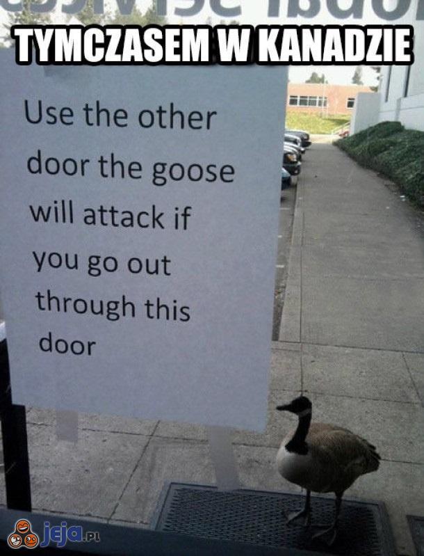 Jeśli użyjesz tych drzwi, gęś Cię zaatakuje