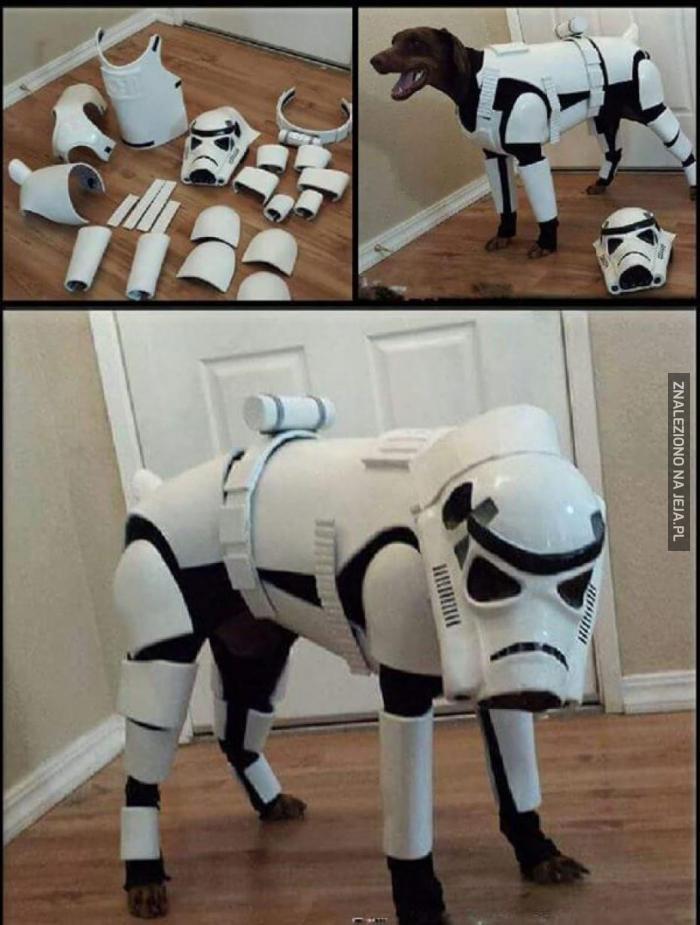 Gotowy na wojny psów!