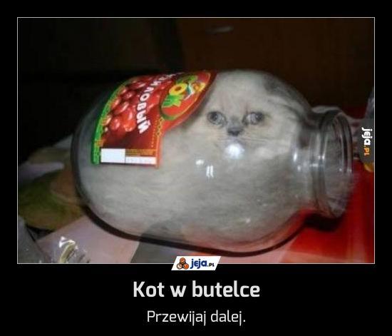 Kot w butelce