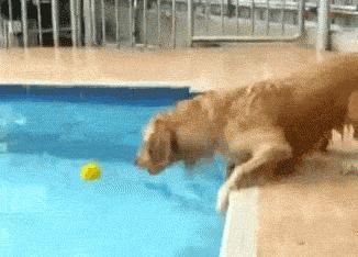 Pies i piłeczka w basenie