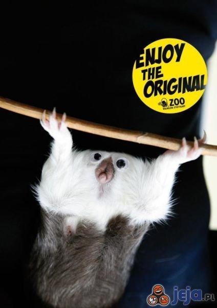Oryginalne Zoo