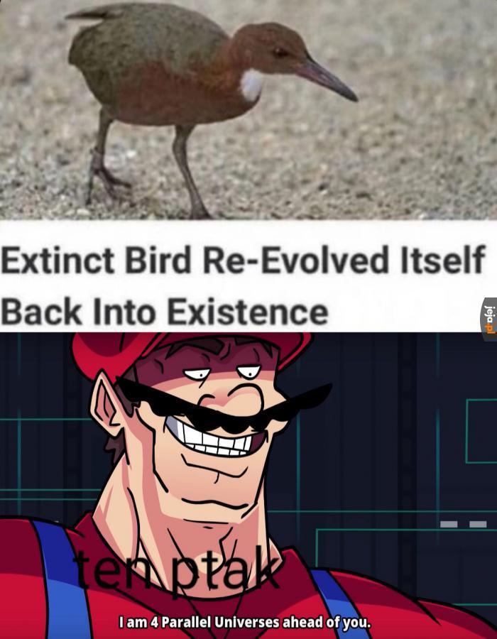 *tytuł re-ewoluuje*